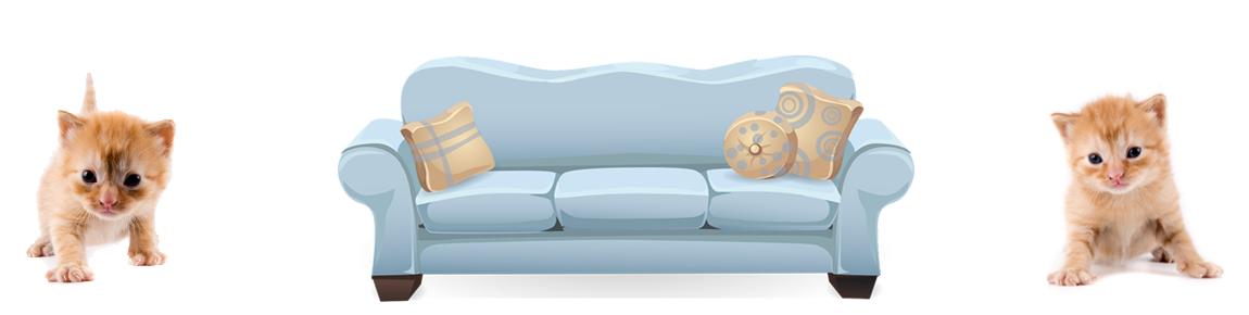 urin auf sofa entfernen biodor animal. Black Bedroom Furniture Sets. Home Design Ideas